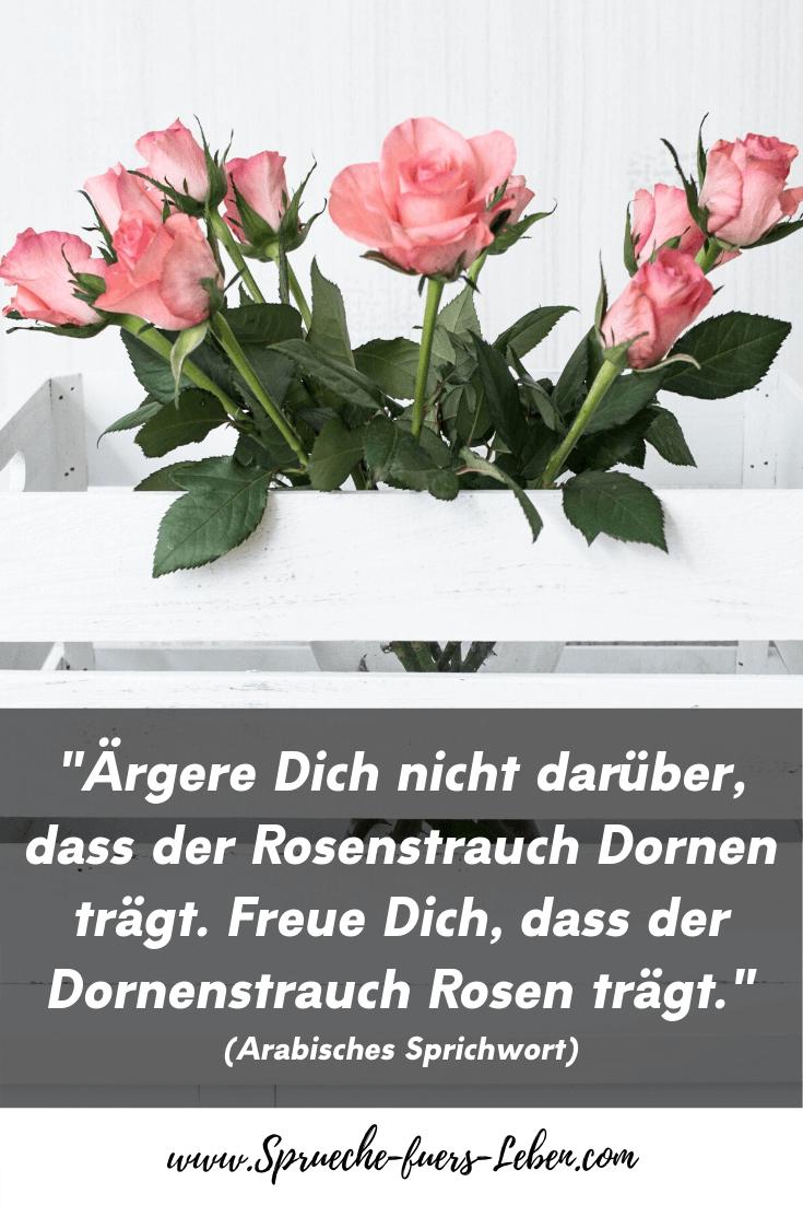 """""""Ärgere Dich nicht darüber, dass der Rosenstrauch Dornen trägt. Freue Dich, dass der Dornenstrauch Rosen trägt."""" (Arabisches Sprichwort)"""