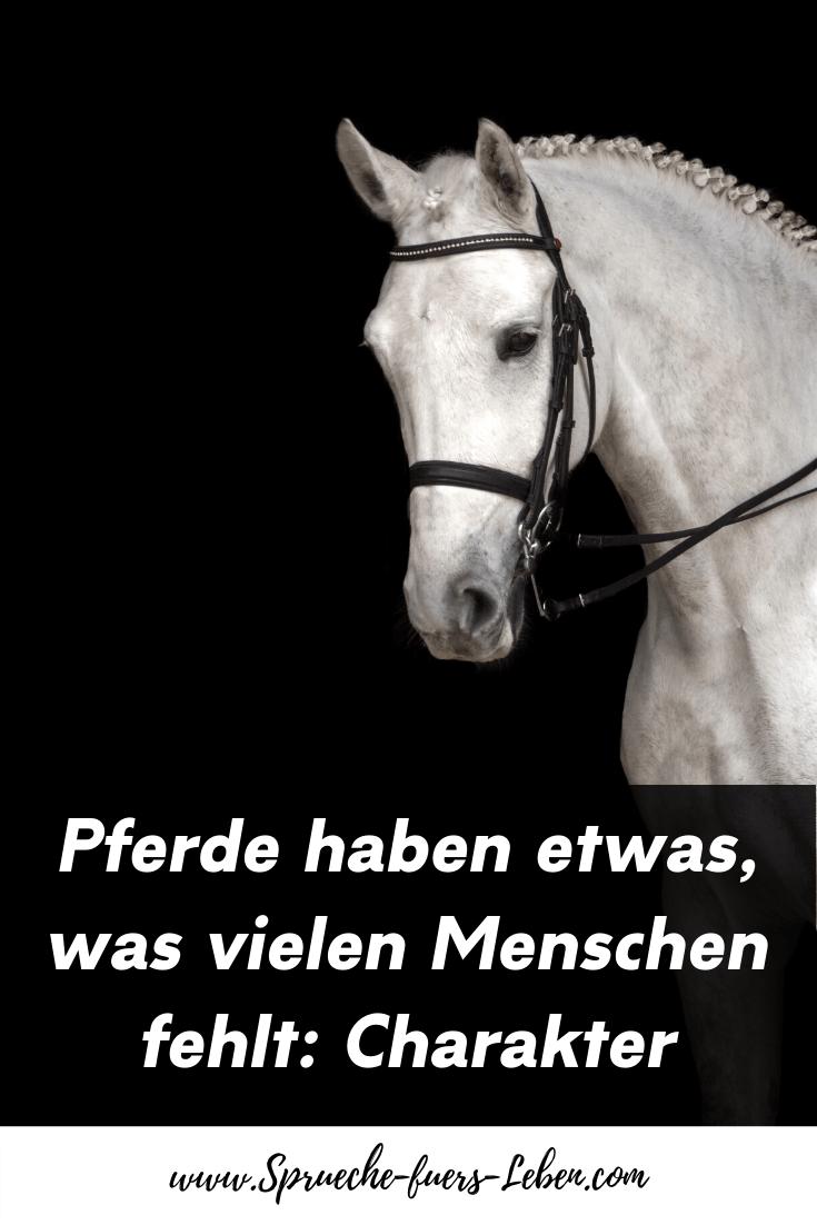 Pferde haben etwas, was vielen Menschen fehlt: Charakter