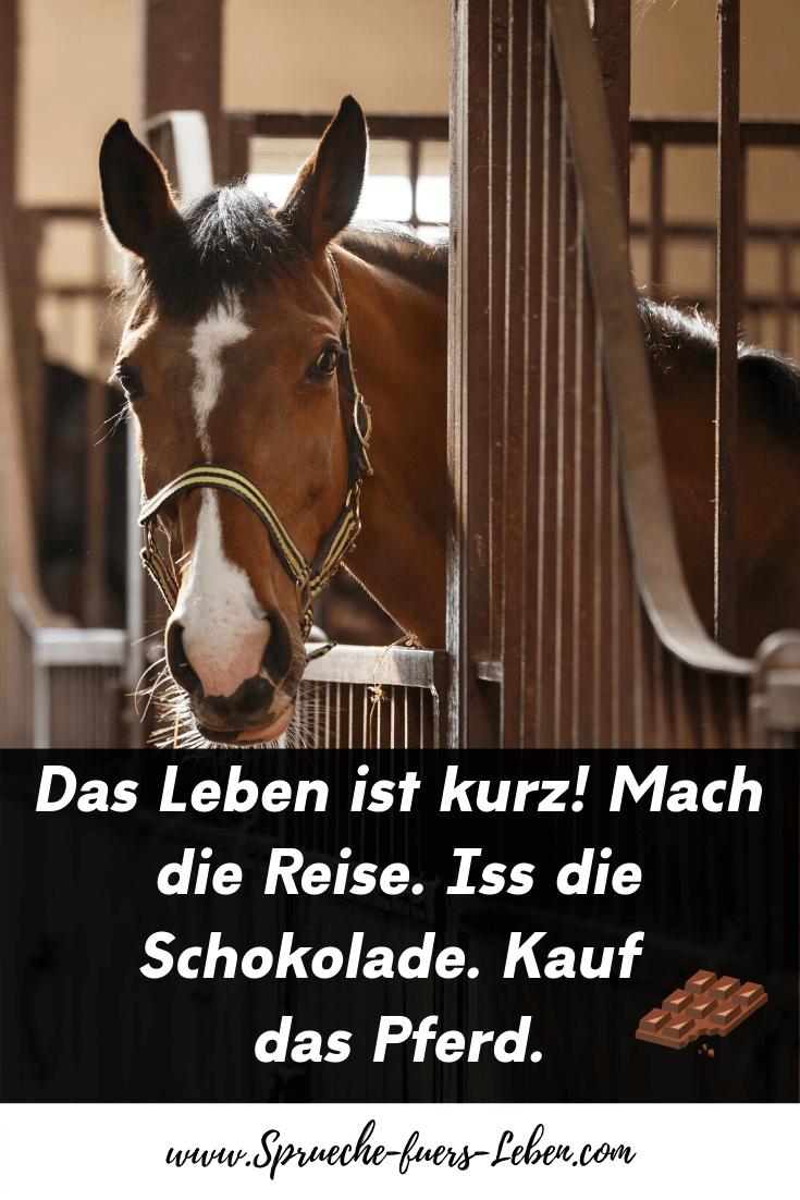 Das Leben ist kurz! Mach die Reise. Iss die Schokolade. Kauf das Pferd.