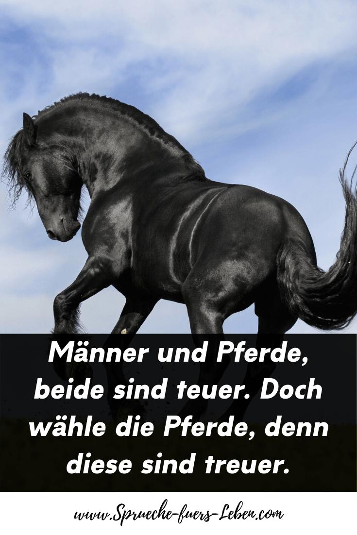 Männer und Pferde, beide sind teuer. Doch wähle die Pferde, denn diese sind treuer.