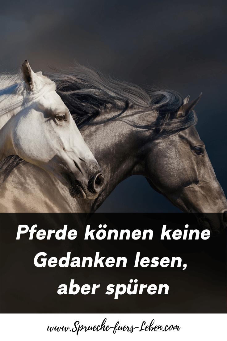 Pferde können keine Gedanken lesen, aber spüren