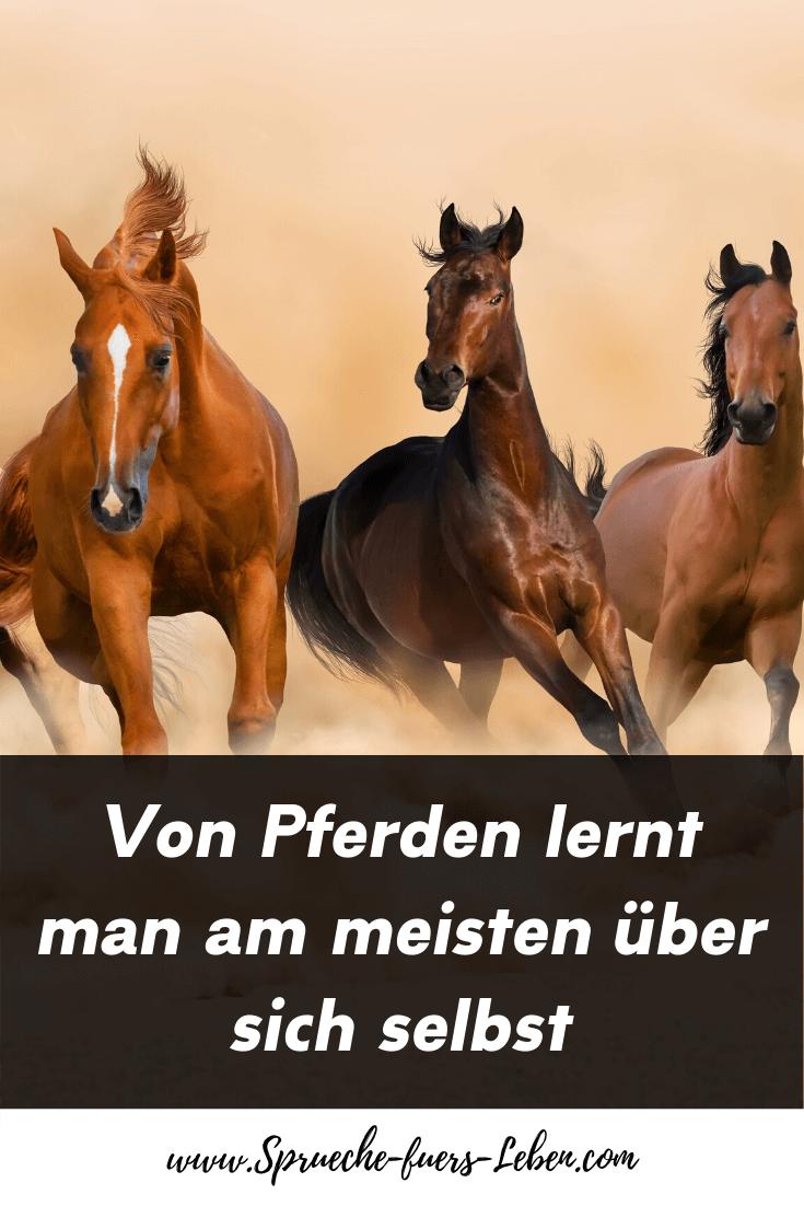Von Pferden lernt man am meisten über sich selbst