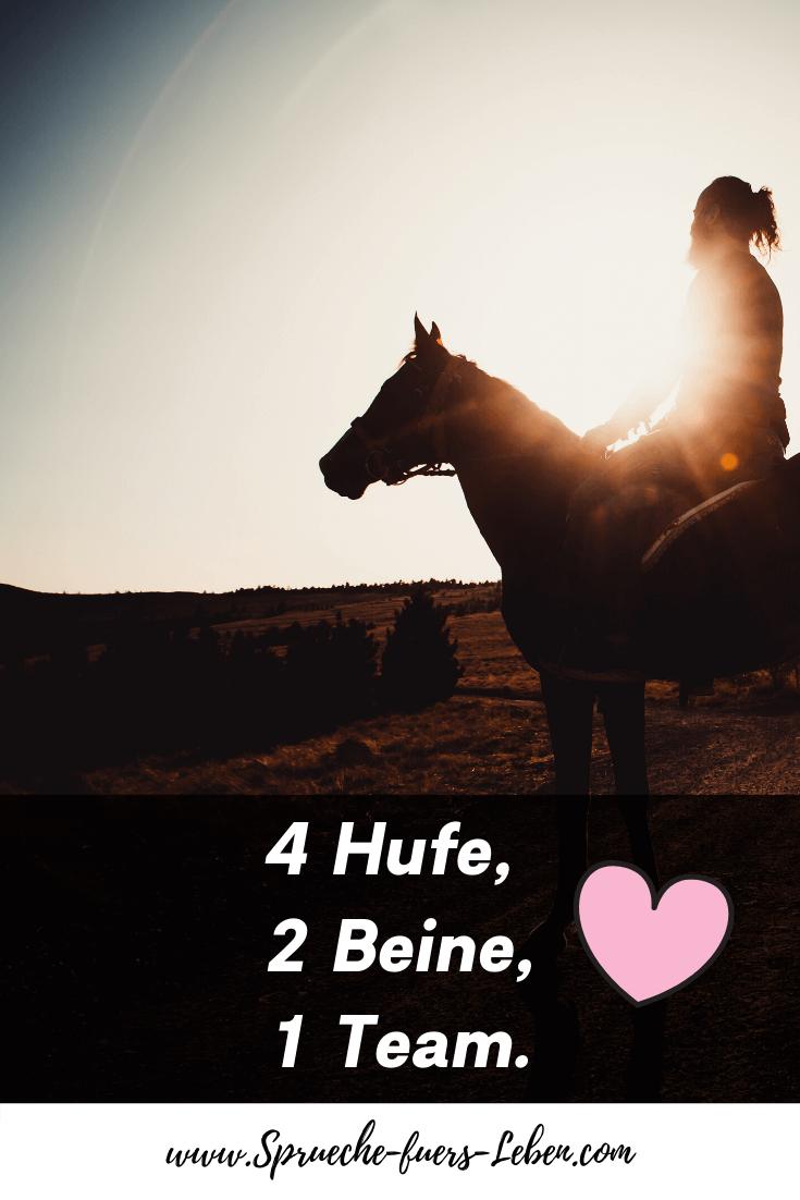 4 Hufe, 2 Beine, 1 Team.