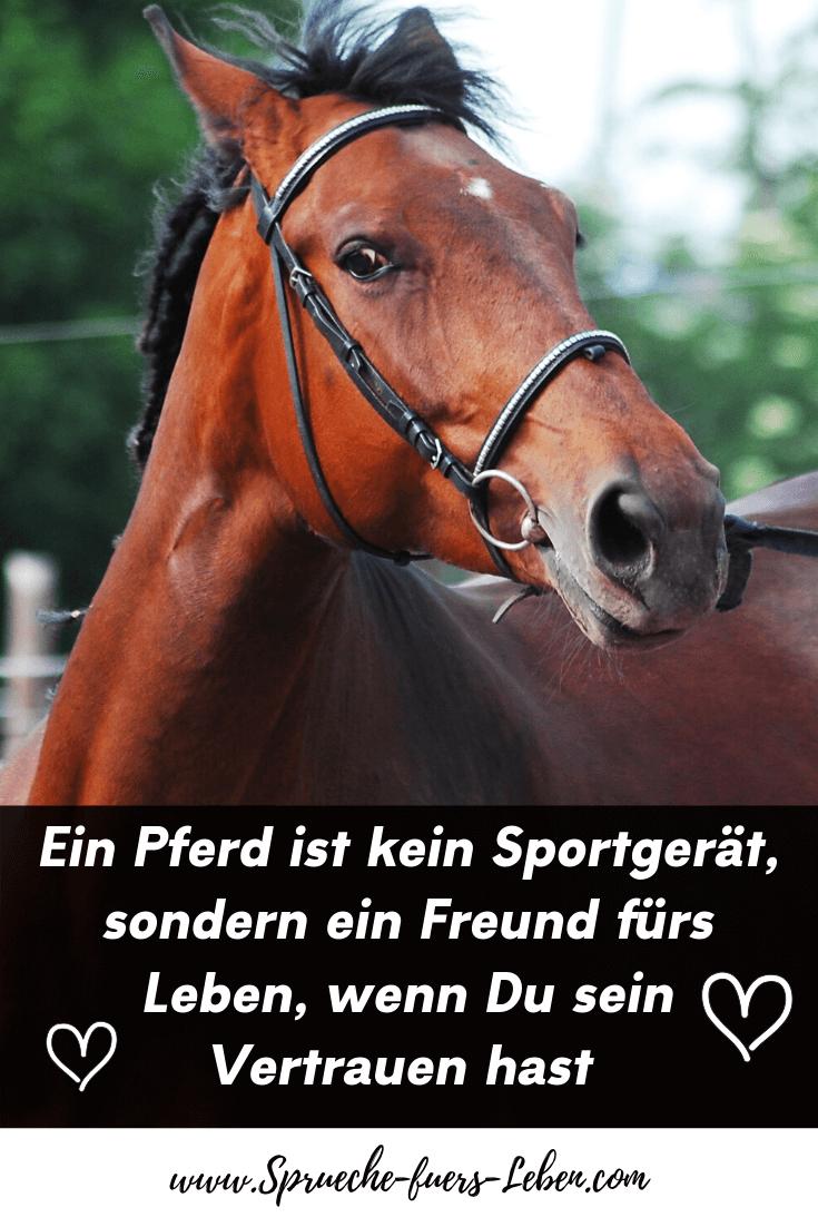 Ein Pferd ist kein Sportgerät, sondern ein Freund fürs Leben, wenn Du sein Vertrauen hast
