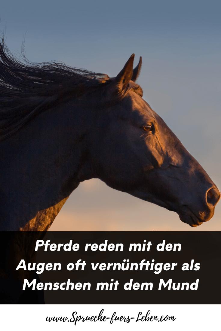 Pferde reden mit den Augen oft vernünftiger als Menschen mit dem Mund
