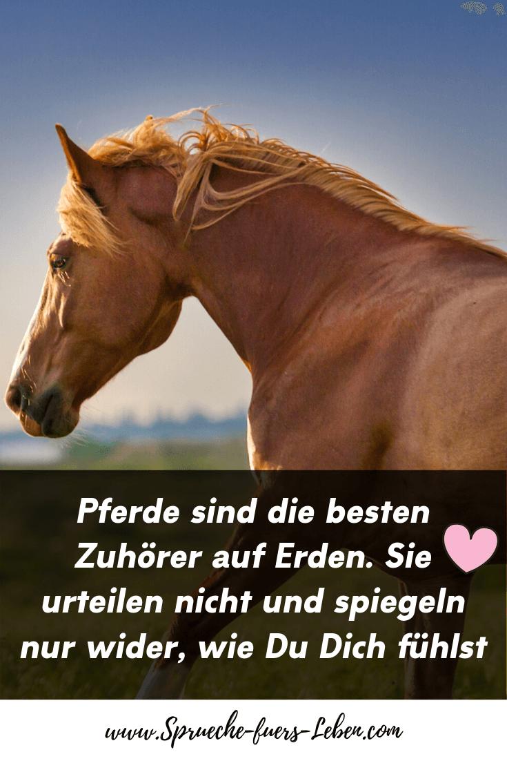 Pferde sind die besten Zuhörer auf Erden. Sie urteilen nicht und spiegeln nur wider, wie Du Dich fühlst.