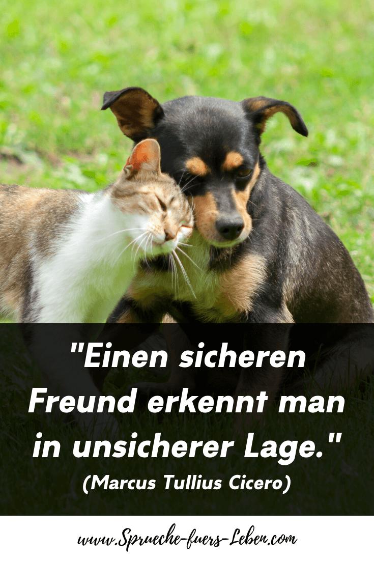"""""""Einen sicheren Freund erkennt man in unsicherer Lage."""" (Marcus Tullius Cicero)"""