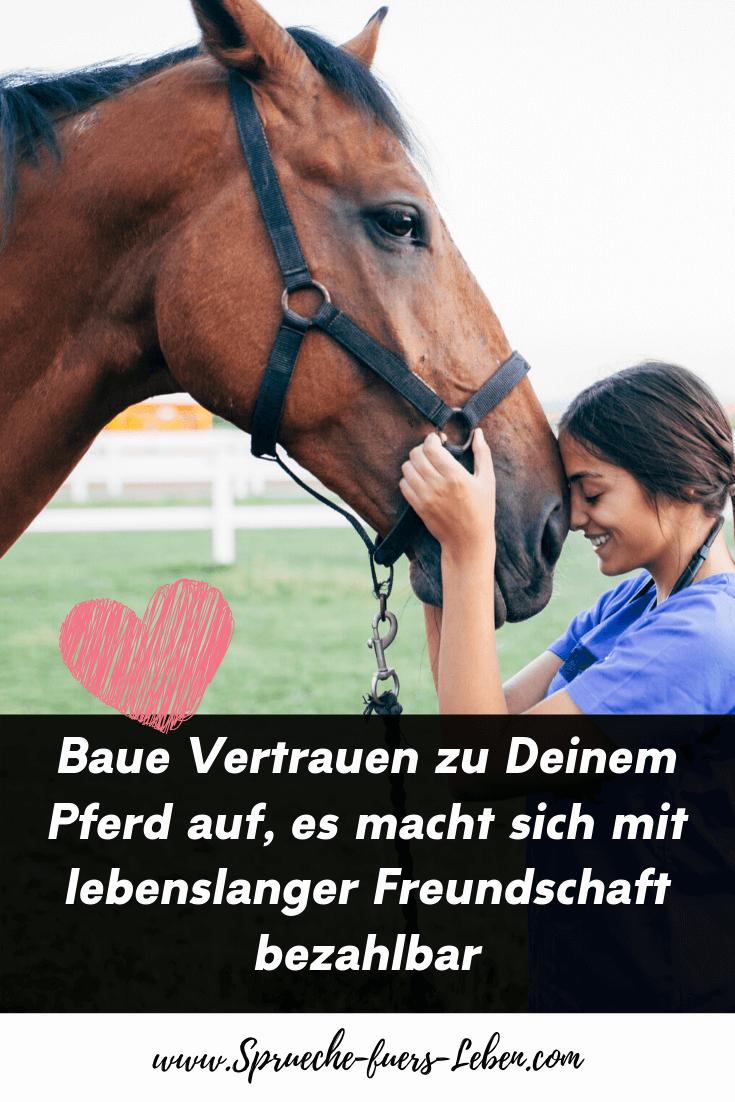 Baue Vertrauen zu Deinem Pferd auf, es macht sich mit lebenslanger Freundschaft bezahlbar