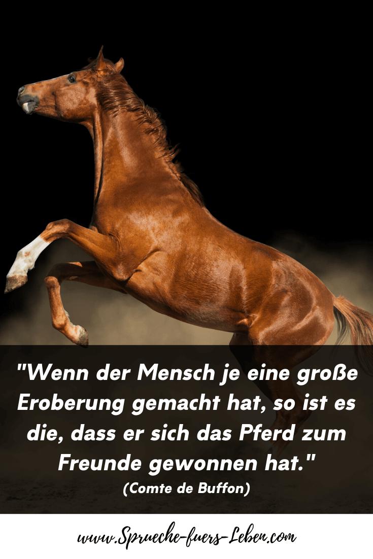 """""""Wenn der Mensch je eine große Eroberung gemacht hat, so ist es die, dass er sich das Pferd zum Freunde gewonnen hat."""" (Comte de Buffon)"""