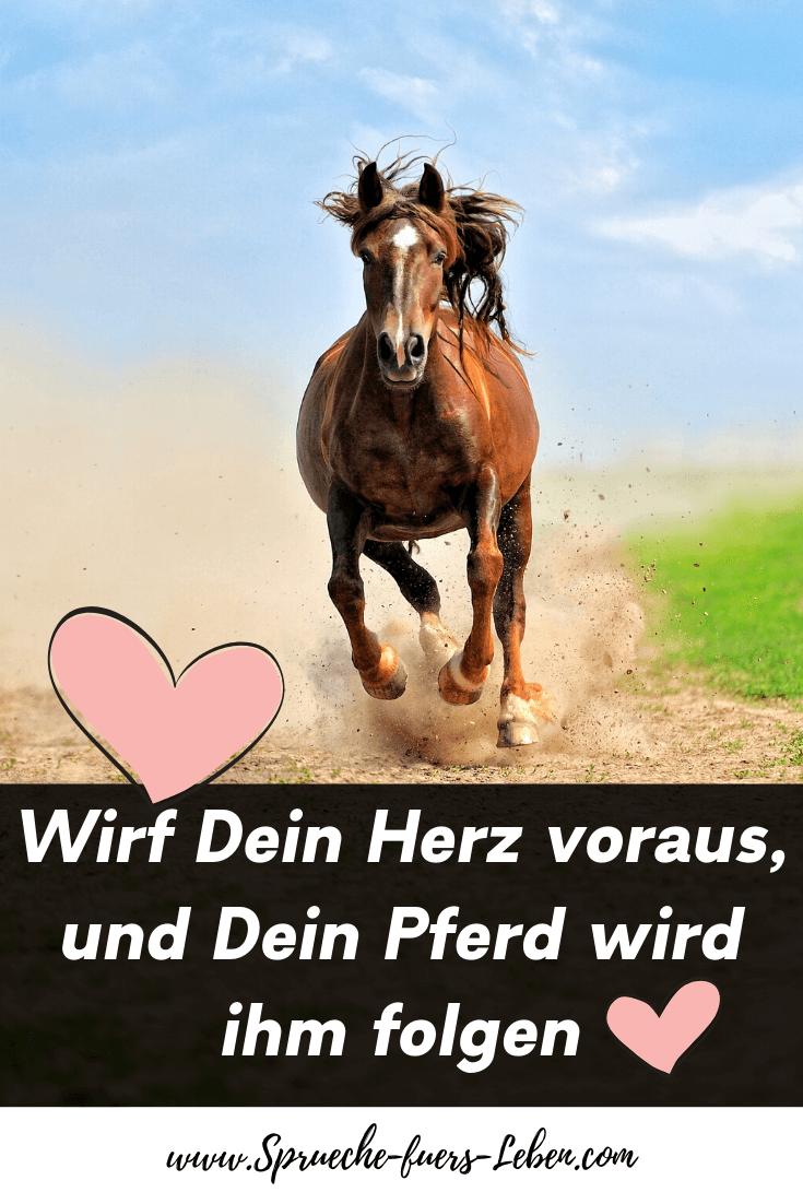 Wirf Dein Herz voraus, und Dein Pferd wird ihm folgen