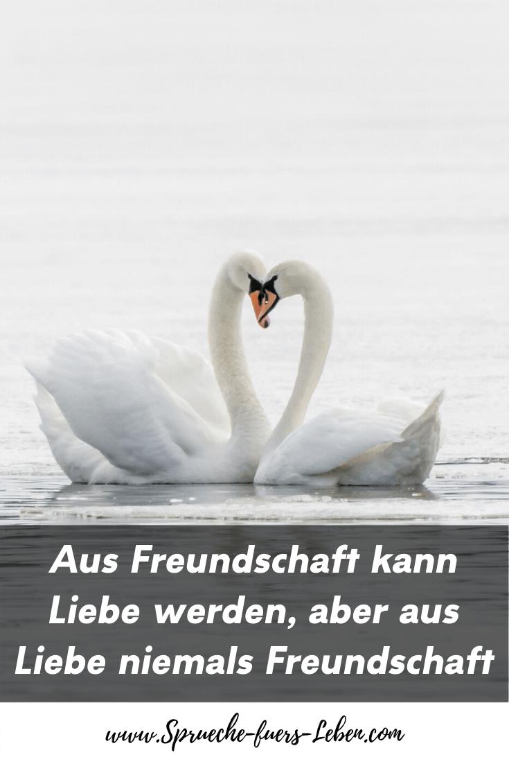 Aus Freundschaft kann Liebe werden, aber aus Liebe niemals Freundschaft