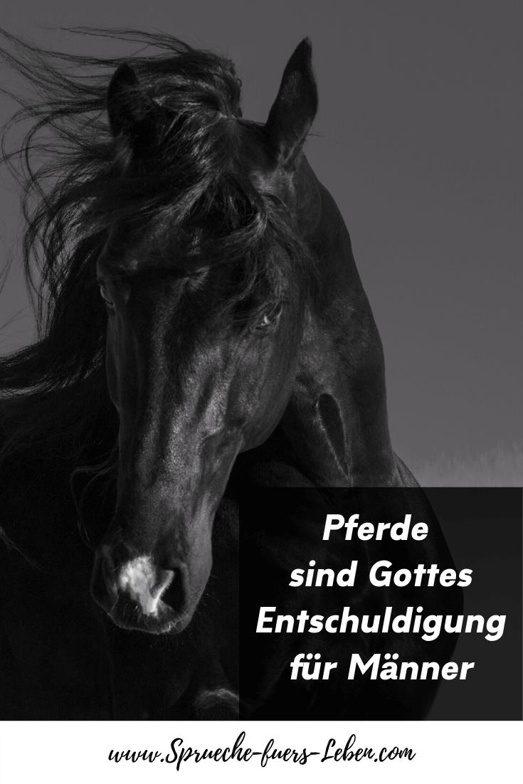Pferde sind Gottes Entschuldigung für Männer