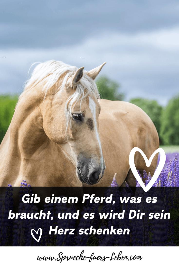 Gib einem Pferd, was es braucht, und es wird Dir sein Herz schenken