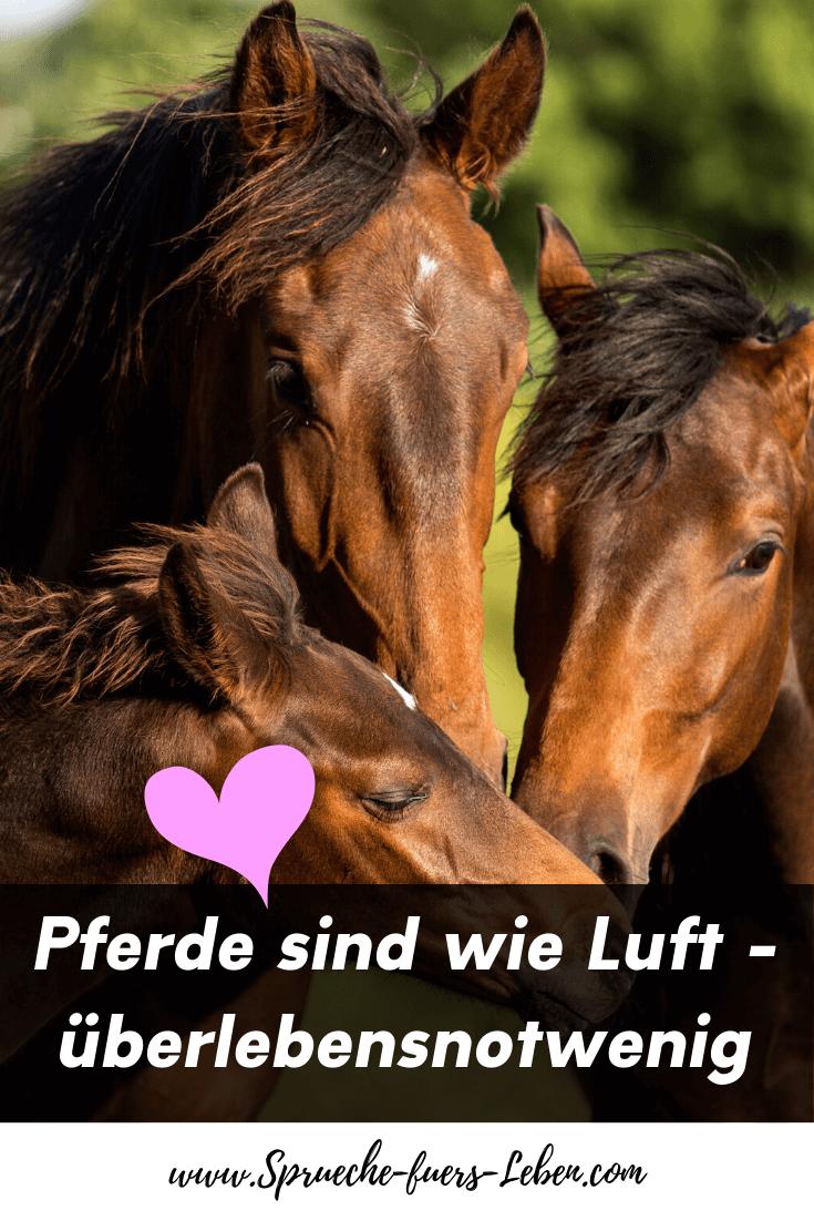 Pferde sind wie Luft - überlebensnotwendig