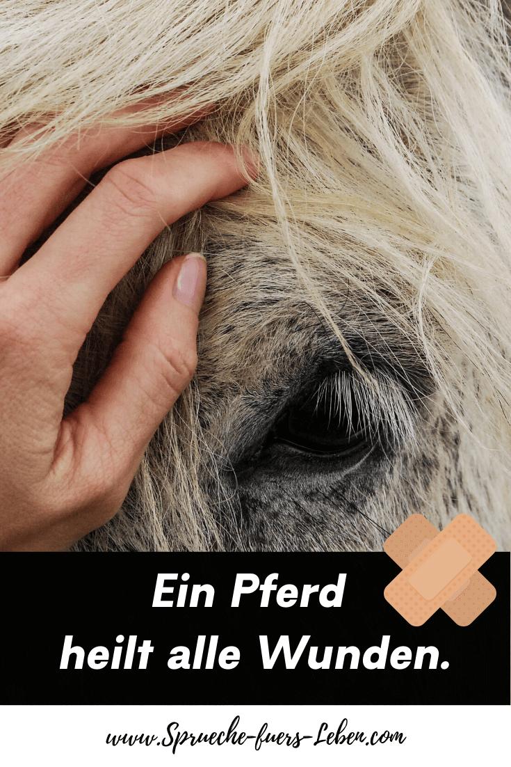 Ein Pferd heilt alle Wunden.