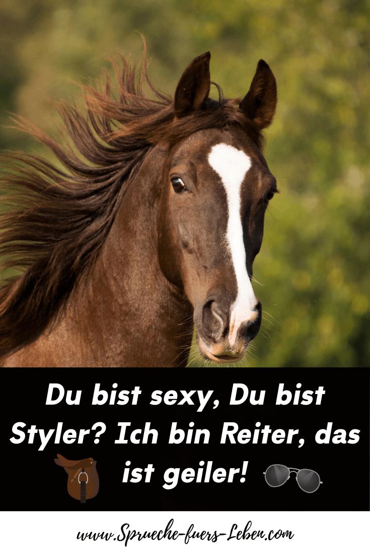 Du bist sexy, Du bist Styler? Ich bin Reiter, das ist geiler!