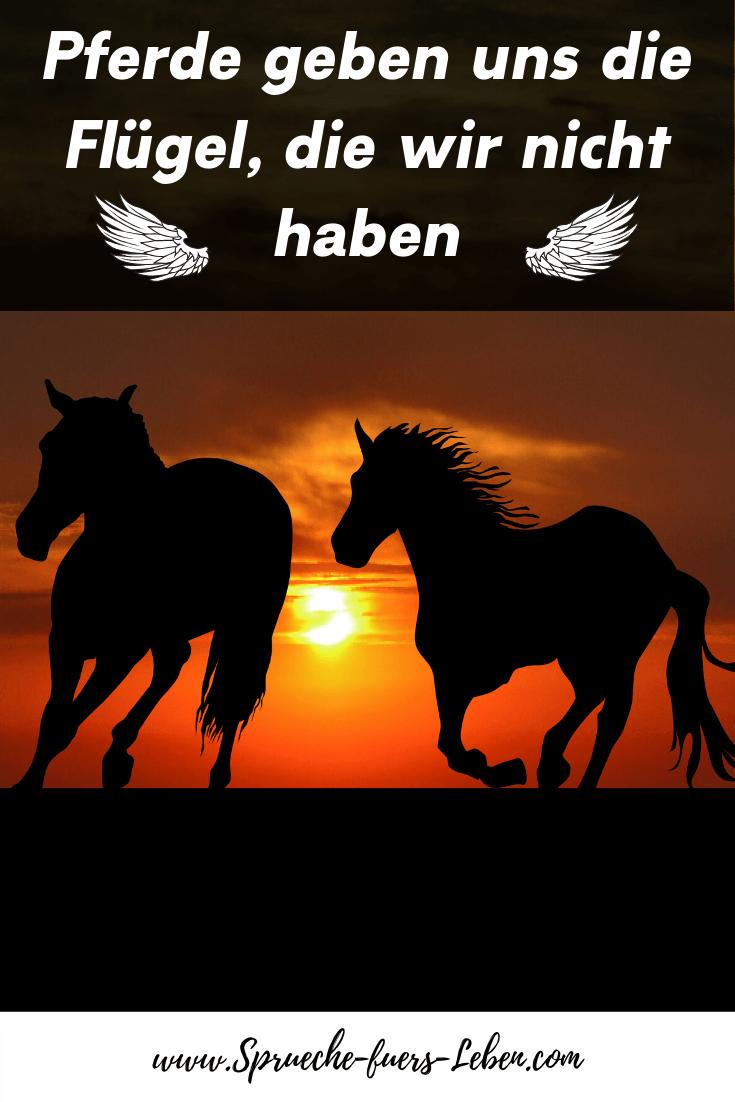 Pferde geben uns die Flügel, die wir nicht haben