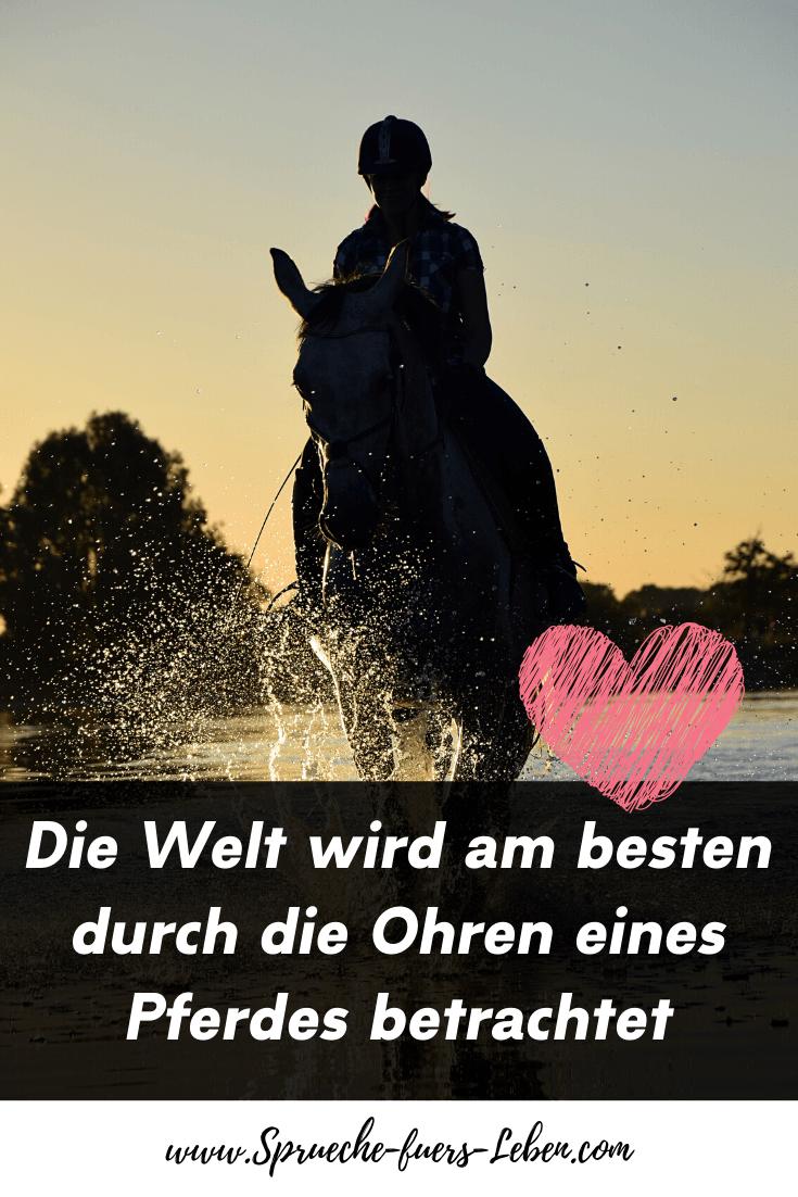 Die Welt wird am besten durch die Ohren eines Pferdes betrachtet