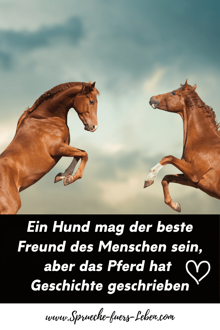 Ein Hund mag der beste Freund des Menschen sein, aber das Pferd hat Geschichte geschrieben