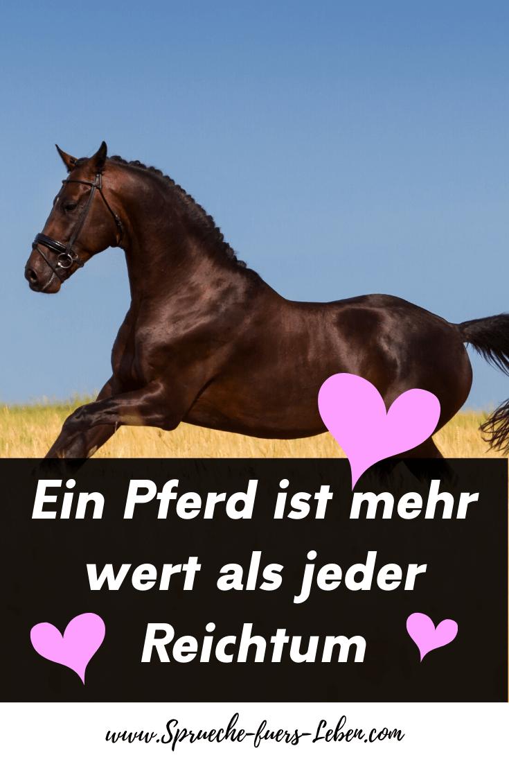 Ein Pferd ist mehr wert als jeder Reichtum