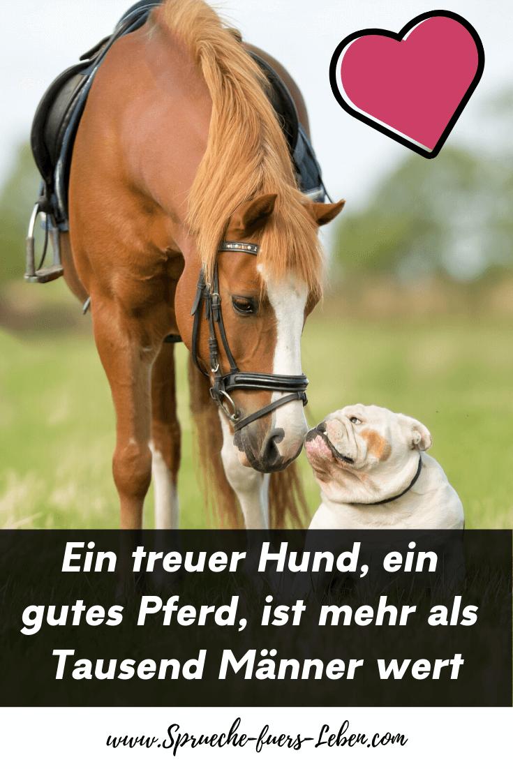 Ein treuer Hund, ein gutes Pferd, ist mehr als Tausend Männer wert