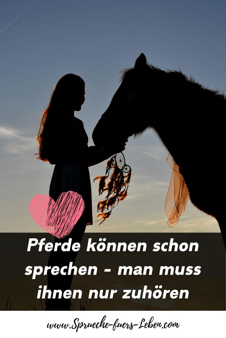 Pferde können schon sprechen - man muss ihnen nur zuhören