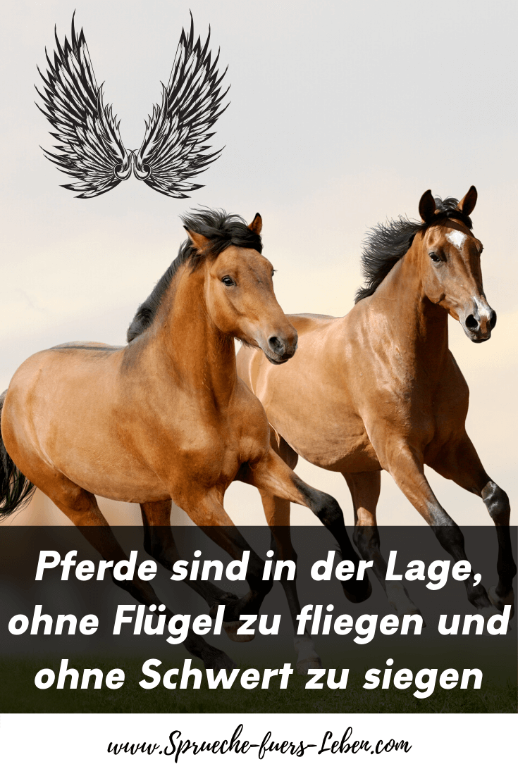 Pferde sind in der Lage, ohne Flügel zu fliegen und ohne Schwert zu siegen