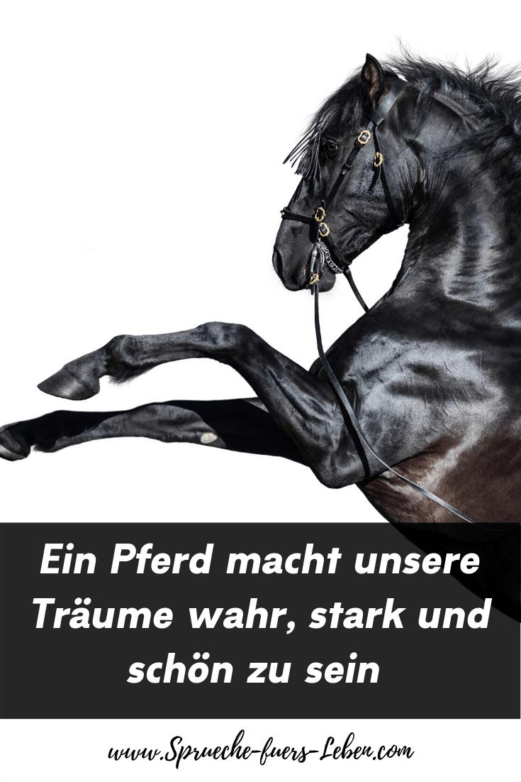 Ein Pferd macht unsere Träume wahr, stark und schön zu sein