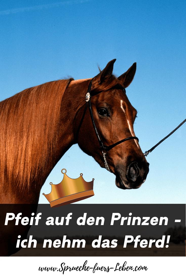 Pfeif auf den Prinzen - ich nehm das Pferd!