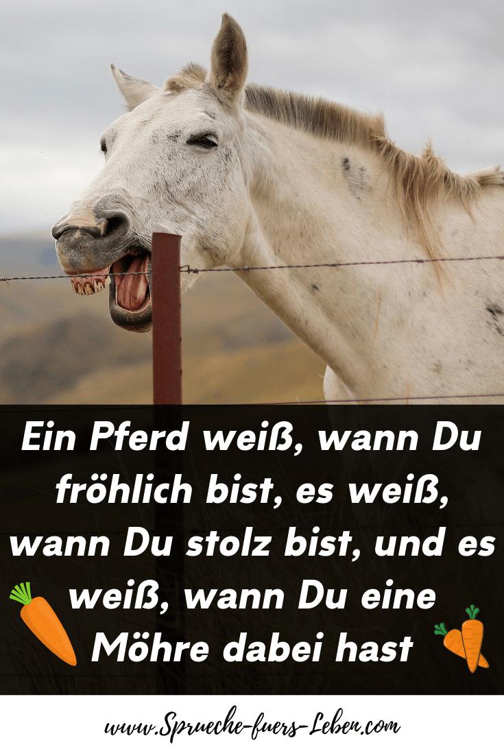 Ein Pferd weiß, wann Du fröhlich bist, es weiß, wann Du stolz bist, und es weiß, wann Du eine Möhre dabei hast
