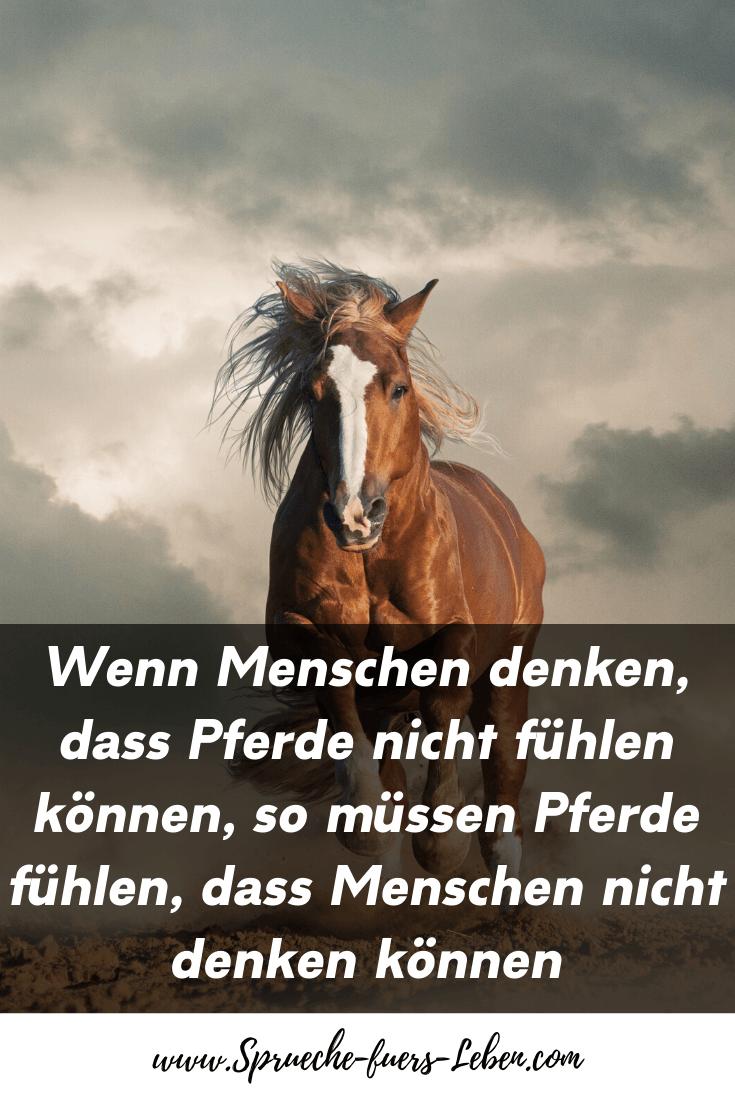 Wenn Menschen denken, dass Pferde nicht fühlen können, so müssen Pferde fühlen, dass Menschen nicht denken können