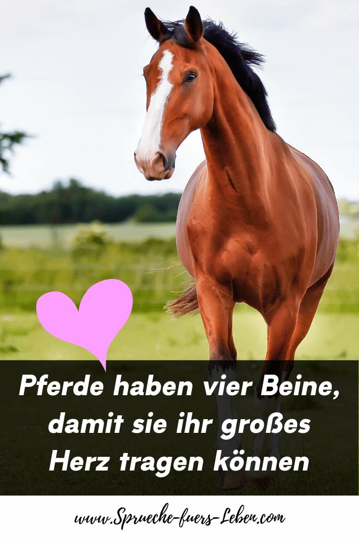 Pferde haben vier Beine, damit sie ihr großes Herz tragen können