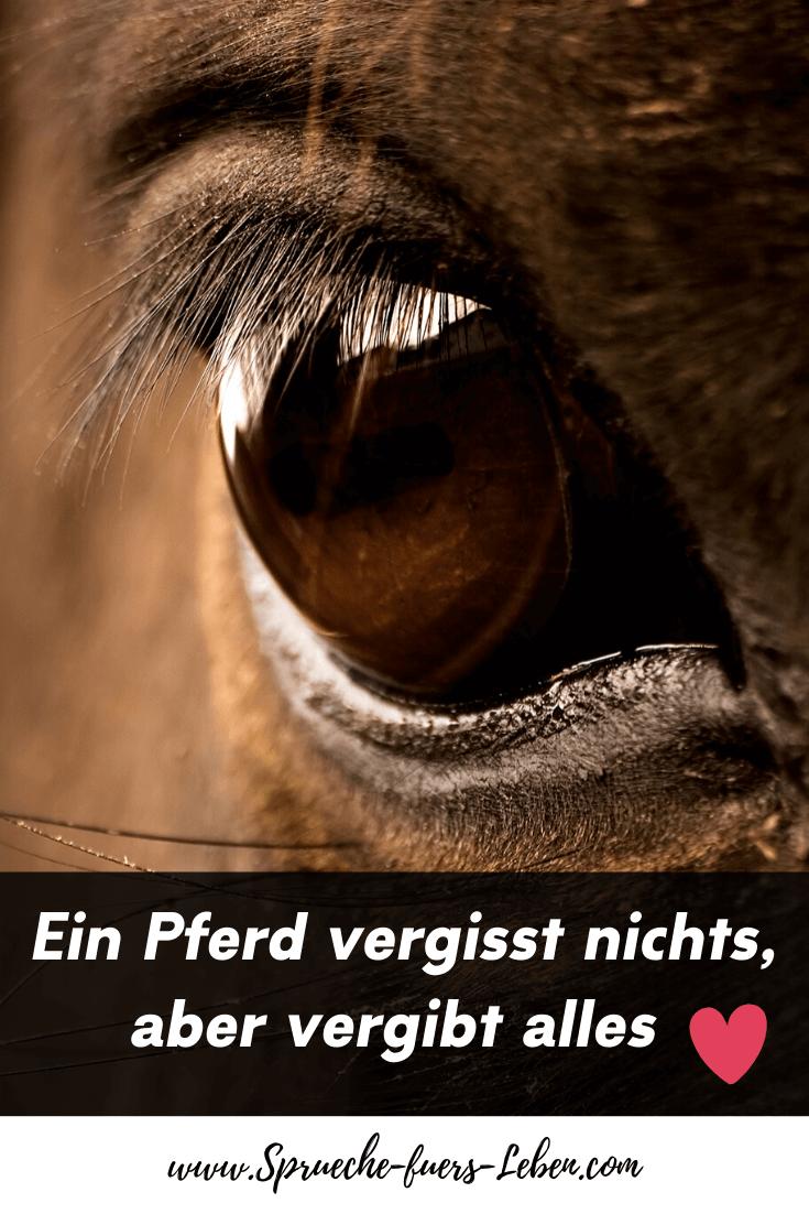Ein Pferd vergisst nichts, aber vergibt alles