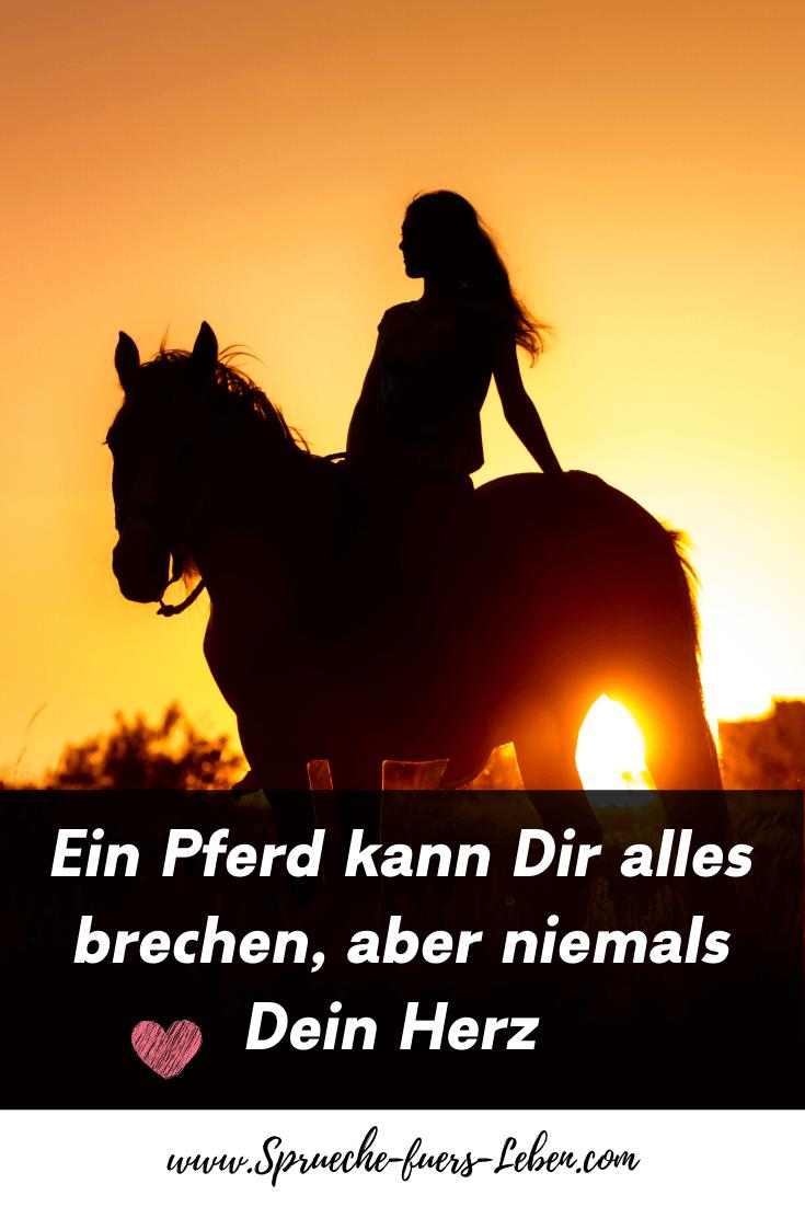 Ein Pferd kann Dir alles brechen, aber niemals Dein Herz