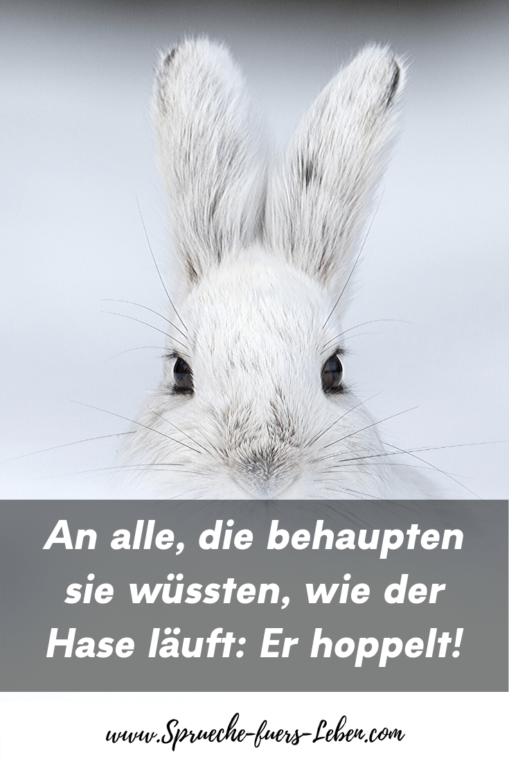 An alle, die behaupten sie wüssten, wie der Hase läuft: Er hoppelt!