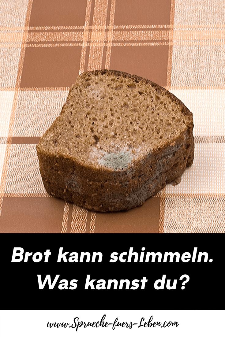 Brot kann schimmeln. Was kannst du?