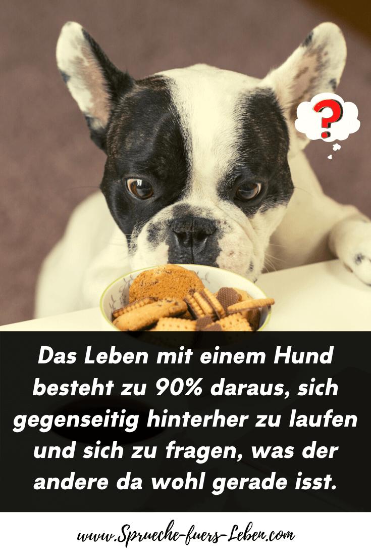 Das Leben mit einem Hund besteht zu 90% daraus, sich gegenseitig hinterher zu laufen und sich zu fragen, was der andere da wohl gerade isst.