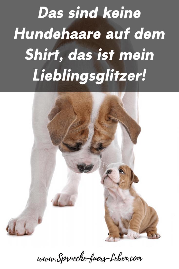 Das sind keine Hundehaare auf dem Shirt, das ist mein Lieblingsglitzer!