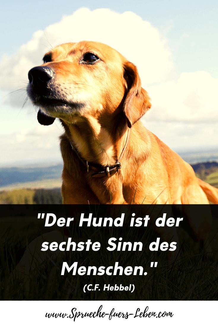 """""""Der Hund ist der sechste Sinn des Menschen."""" (C.F. Hebbel)"""