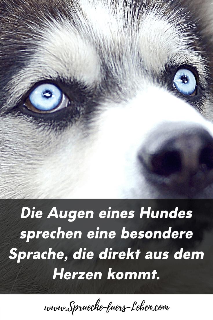 Die Augen eines Hundes sprechen eine besondere Sprache, die direkt aus dem Herzen kommt.