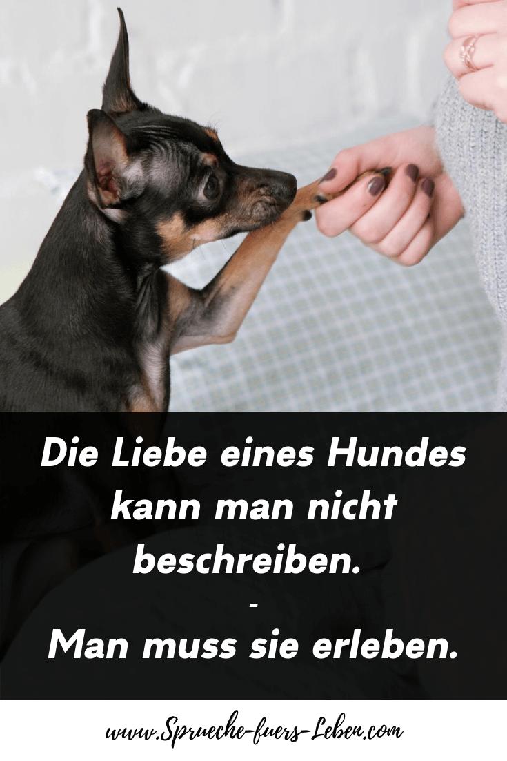 Die Liebe eines Hundes kann man nicht beschreiben. Man muss sie erleben.