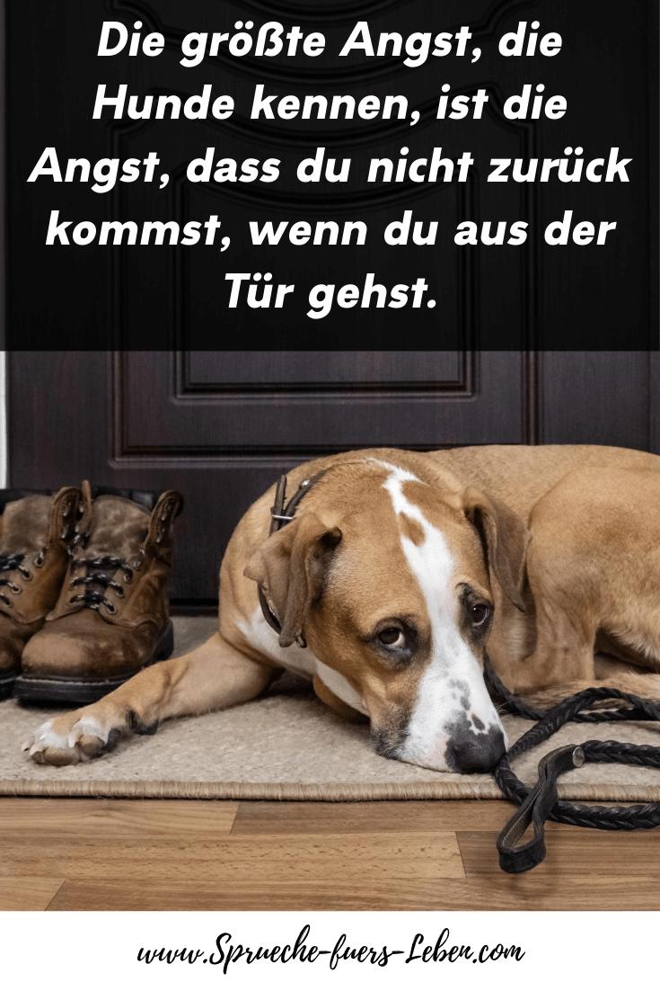 Die größte Angst, die Hunde kennen, ist die Angst, dass du nicht zurück kommst, wenn du aus der Tür gehst.