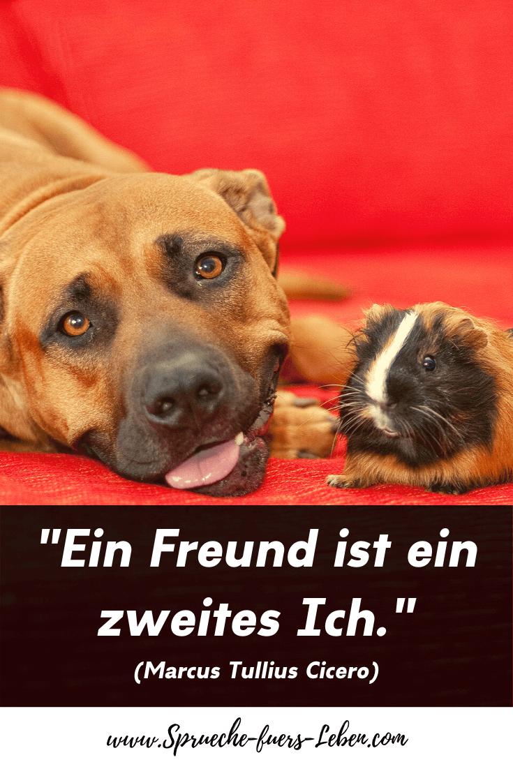 """""""Ein Freund ist ein zweites Ich."""" (Marcus Tullius Cicero)"""