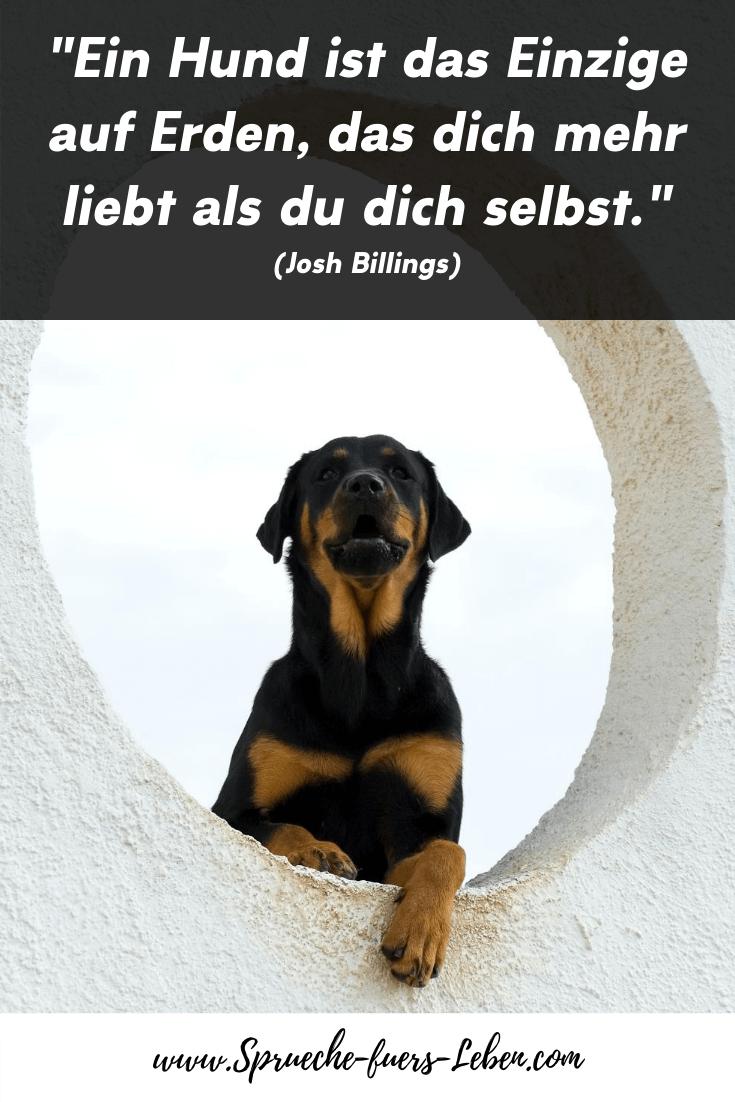 """""""Ein Hund ist das Einzige auf Erden, das dich mehr liebt als du dich selbst."""" (Josh Billings)"""