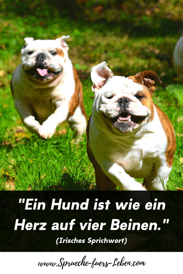 """""""Ein Hund ist wie ein Herz auf vier Beinen."""" (Irisches Sprichwort)"""