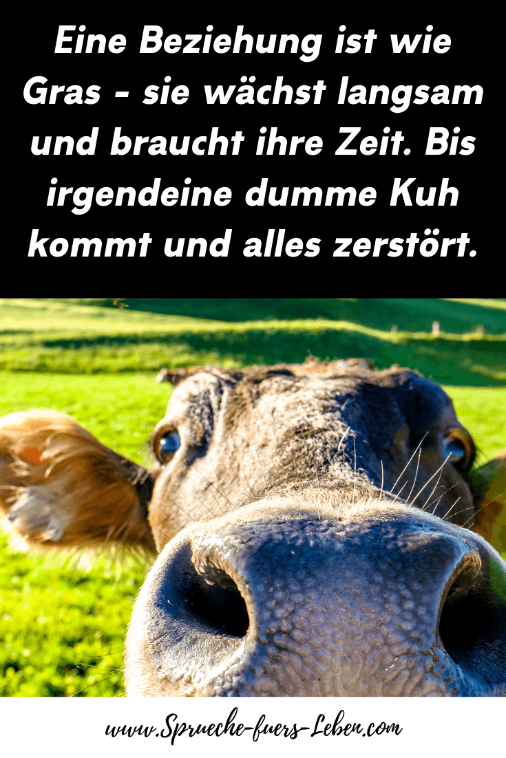 Eine Beziehung ist wie Gras - sie wächst langsam und braucht ihre Zeit. Bis irgendeine dumme Kuh kommt und alles zerstört.