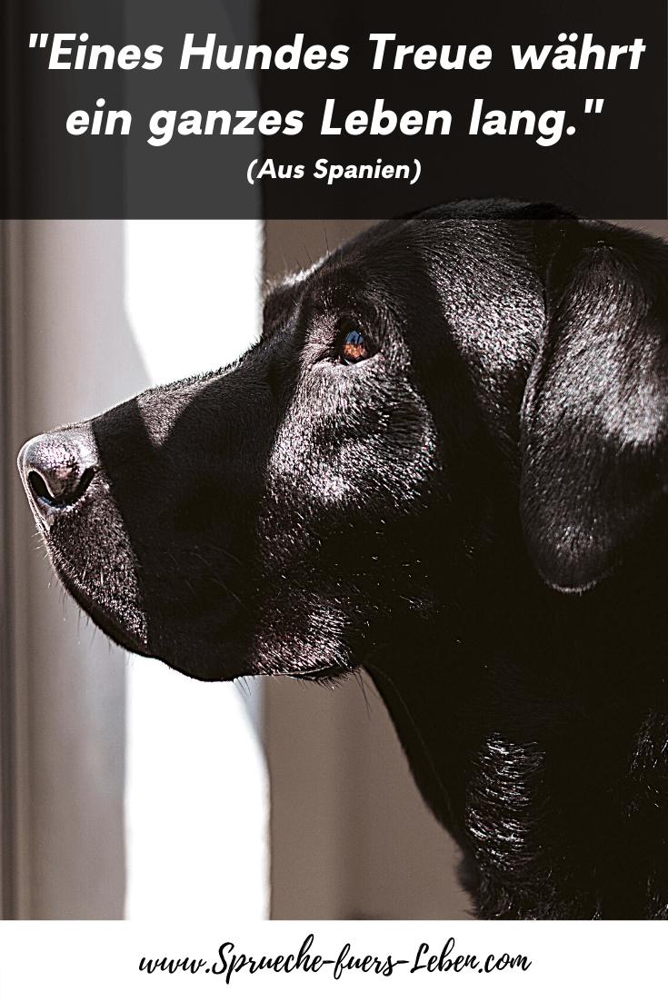 """""""Eines Hundes Treue währt ein ganzes Leben lang."""" (Aus Spanien)"""