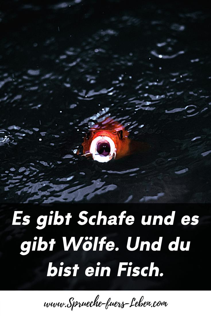 Es gibt Schafe und es gibt Wölfe. Und du bist ein Fisch.