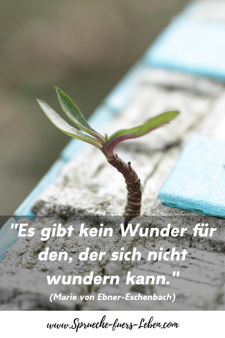 """""""Es gibt kein Wunder für den, der sich nicht wundern kann."""" (Marie von Ebner-Eschenbach)"""