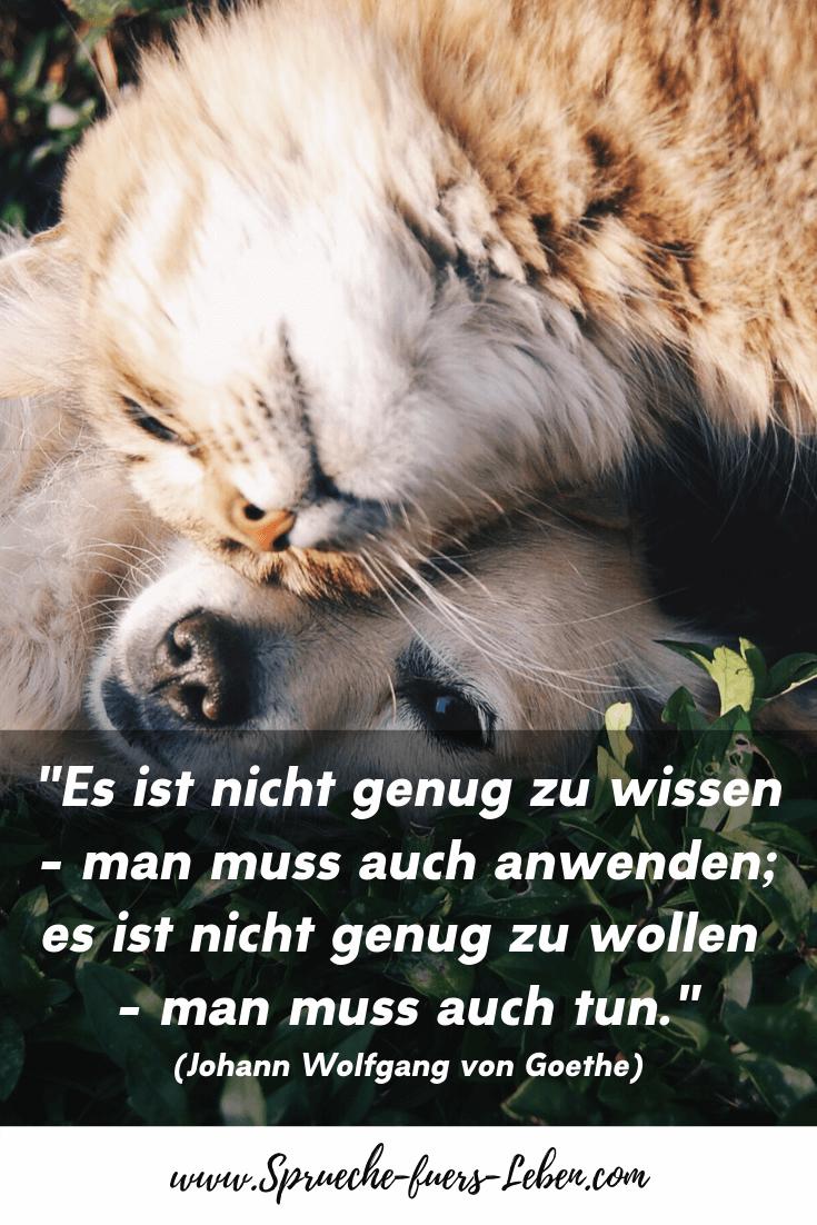 """""""Es ist nicht genug zu wissen - man muss auch anwenden; es ist nicht genug zu wollen - man muss auch tun."""" (Johann Wolfgang von Goethe)"""